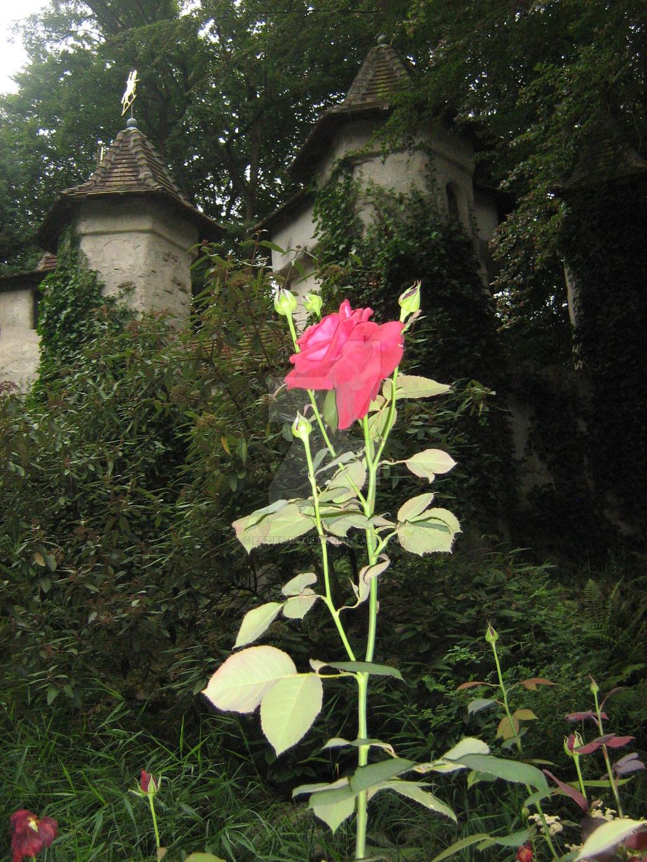 The rose near Sleeping Beauty's Castle in Efteling by Eszies-Eszie