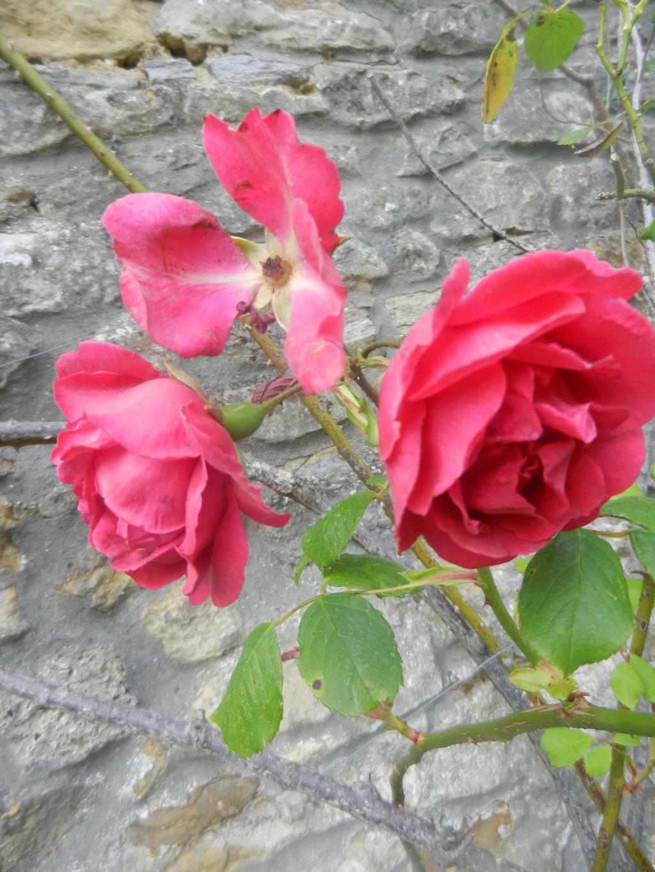 Roses by Eszies-Eszie