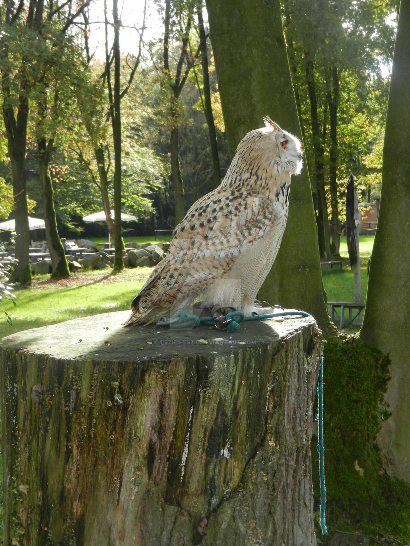 Owl by Eszies-Eszie