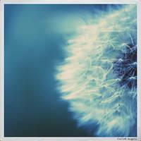 Somnium by gravycat