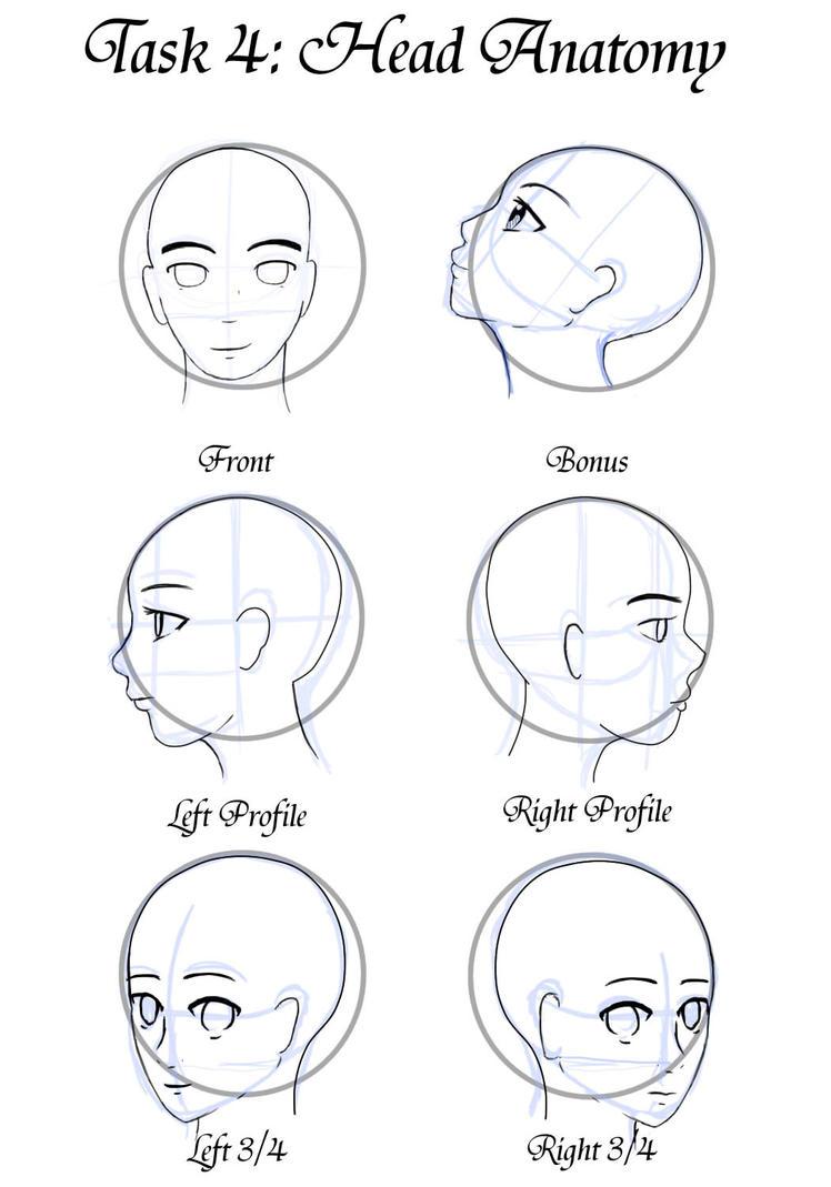Gm Task 4 Head Anatomy 5 By Teacup Creations On Deviantart