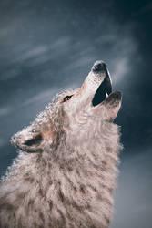 A wolf by dann94