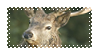 stag stamp by shrimpson