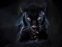 Black Panther by Superman8193