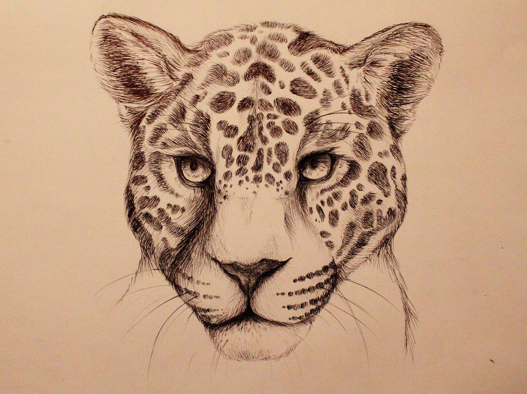 Line Drawing Jaguar : Image gallery jaguar cat drawings