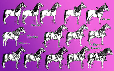 ponies in tack and harness by Refiner