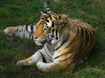 Amur Majesty