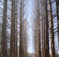 Woods 2 by JustinBHB