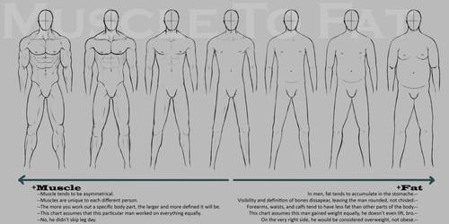Muscle to Fat Chart by KingMaria