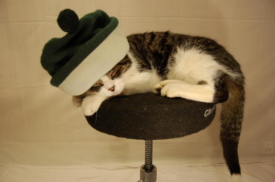 Cat -02- by manverustock