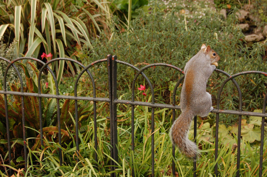 Squirrel -01- by manverustock