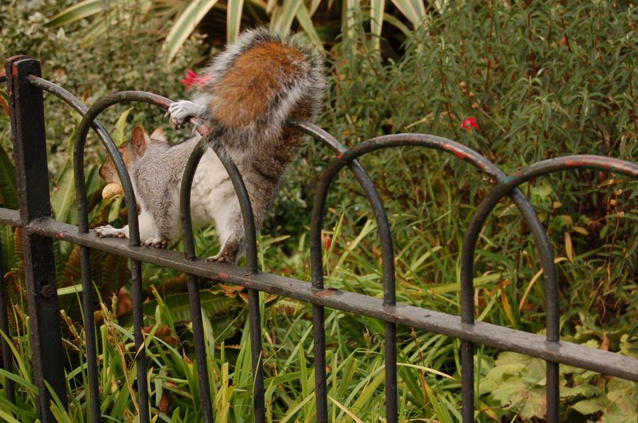 Squirrel -02- by manverustock