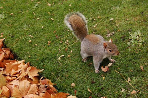 Squirrel -03- by manverustock