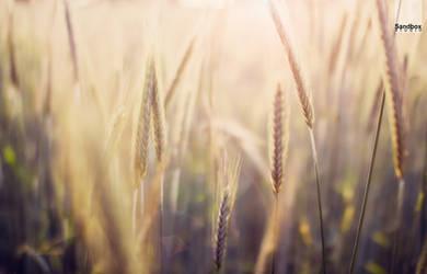 bye, bye cornfields