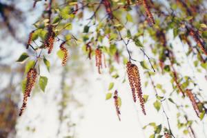Springtime! by Maegondo