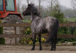 Grey horse stock V