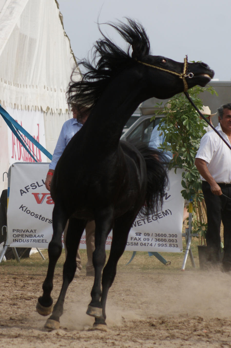 Arabian Horse stock VIII by lovergil