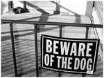 beware of catdog