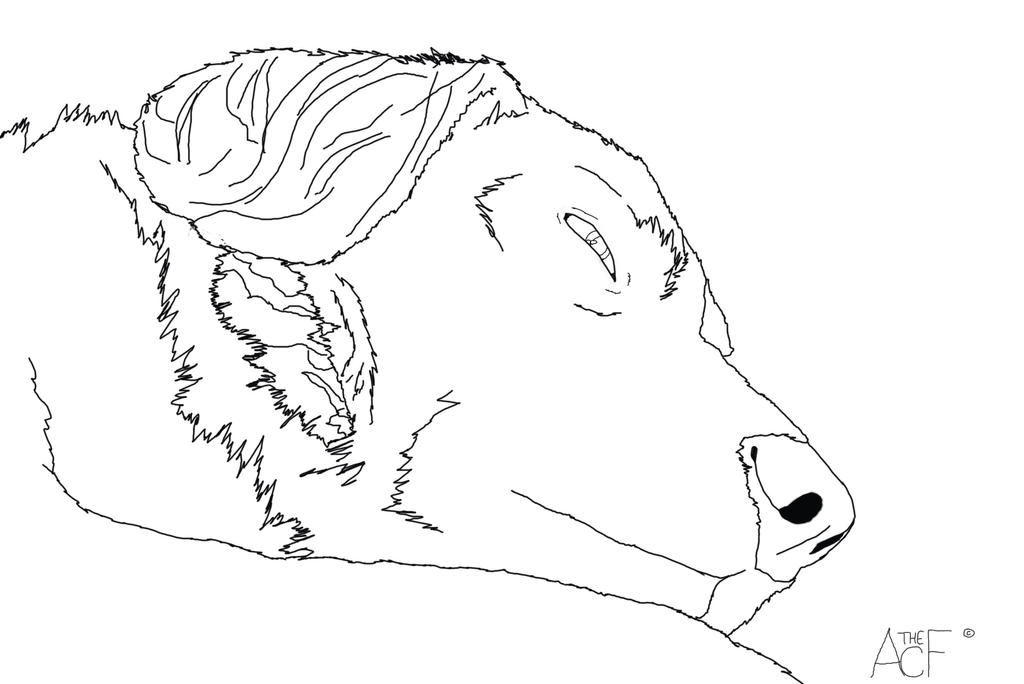 Image Result For Husky Dog Coloring