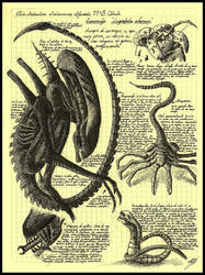 'Da Vinci Alien' by Elkin Salamanca Alarcon by XenomorphSoftworks