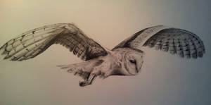 Another hoot hoot, barn owl pencil commission