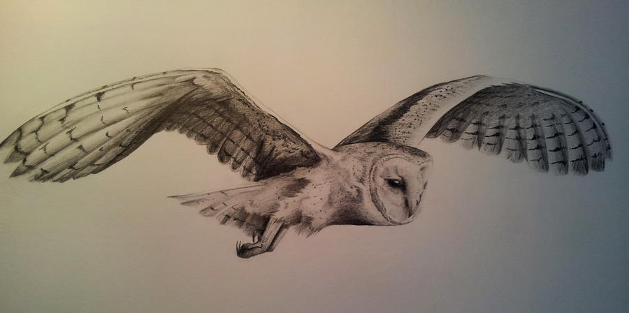 Another hoot hoot, barn owl pencil commission by BecciES