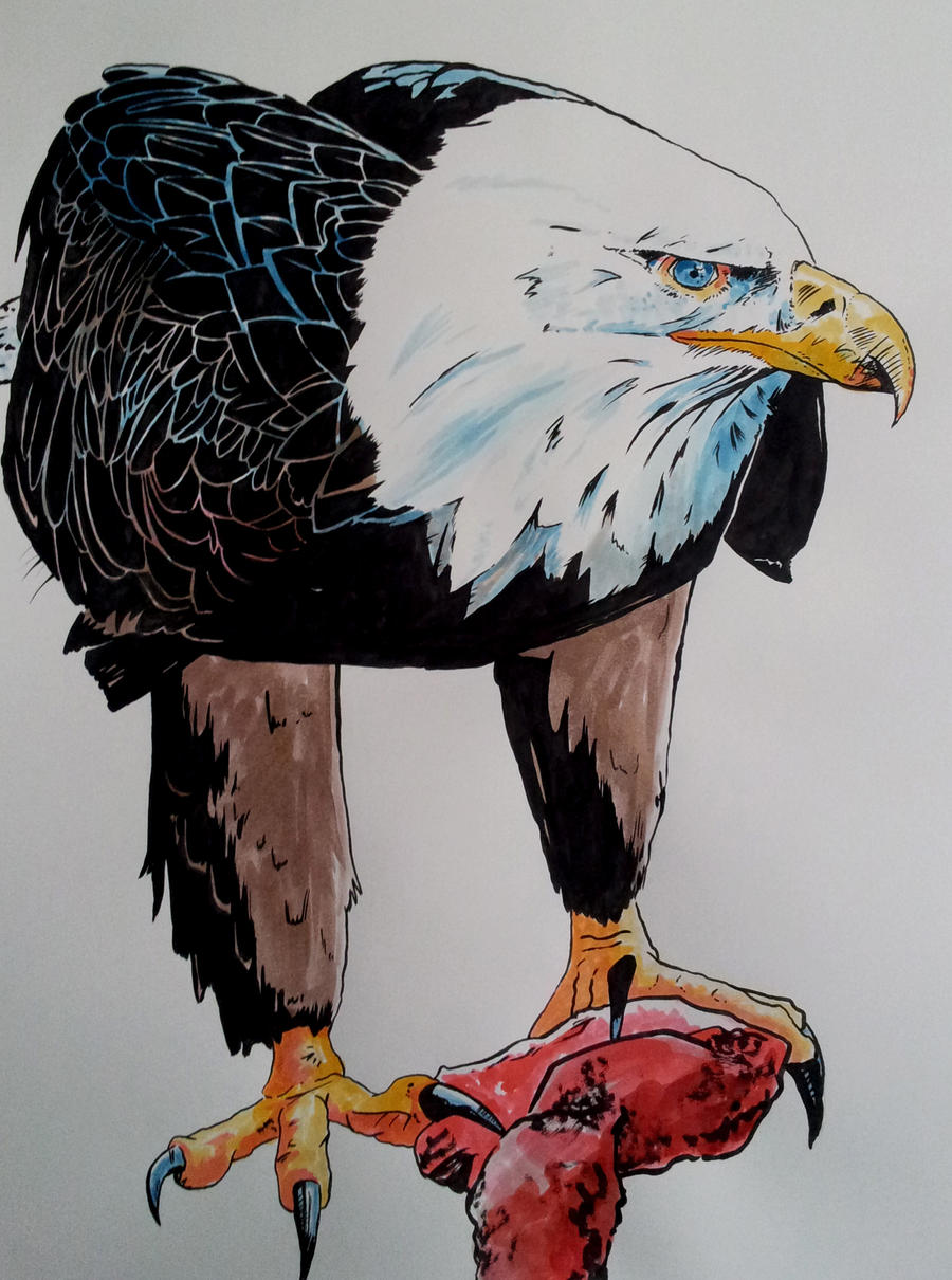 Bald eagle ink by BecciES