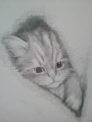 kitten in snuggly space