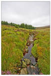 Wicklow mountains 4