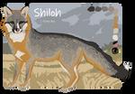 Shiloh [Fursona] Reference