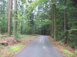 Road in woods by newscoti