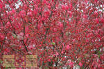 Rosie Crafts Beautiful Berry Bush