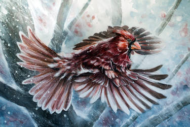 Winter Cardinal by dfbovey