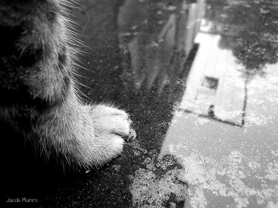 walk away. by Shutter-Shooter