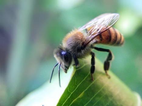 Bee stock 01