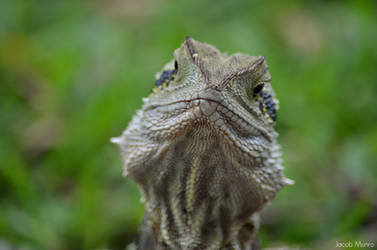 Hello there Mr.Lizard by Shutter-Shooter