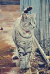 catwalk.
