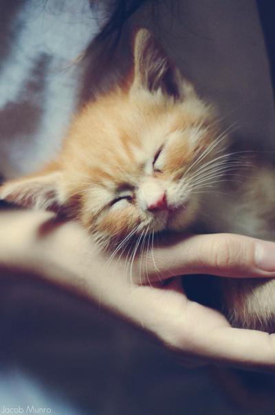 sleepy. by Shutter-Shooter