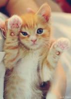 cutie. by Shutter-Shooter