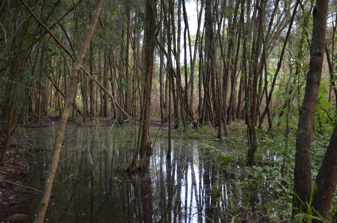 swampy stock. by Shutter-Shooter