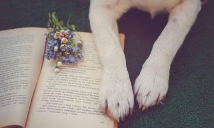 book by huhek