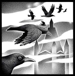 Follow the birds