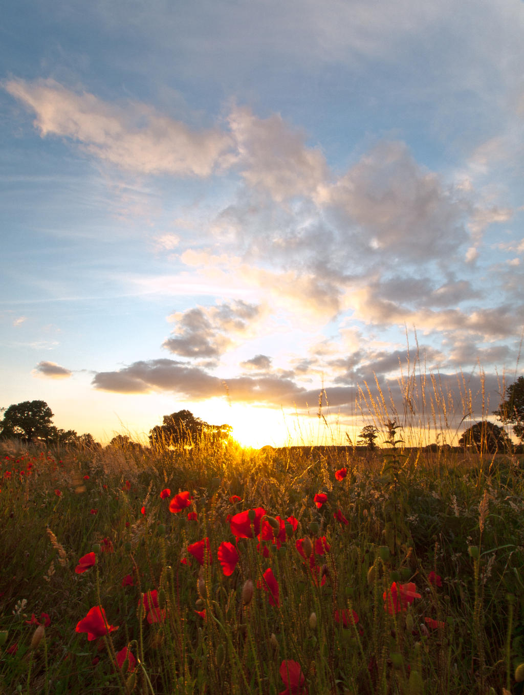 Sunset with Poppy Flowers by davepphotographer