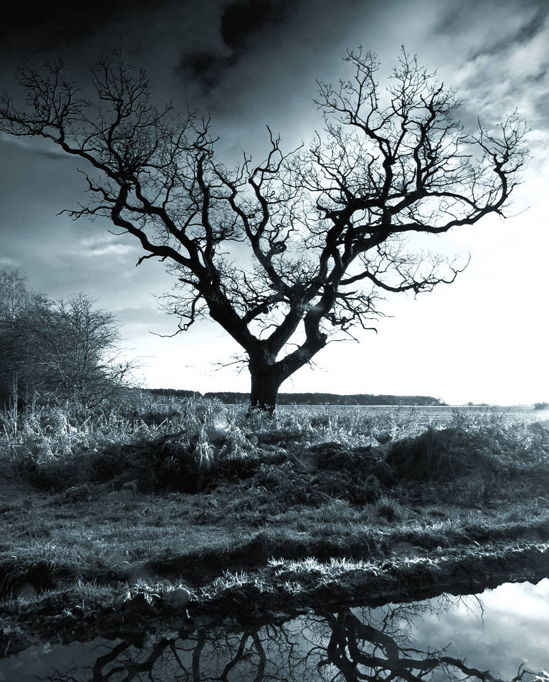 The Old Tree Yorkshire