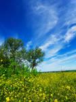 Sky above Ellington village by davepphotographer