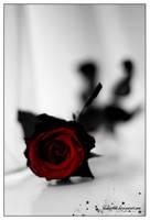 rose by klakier666