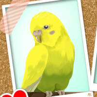 In memory of a sweet budgie