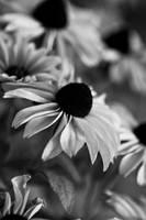 Sunflowers by Oiseauii