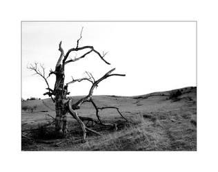 Broken Tree II by Oiseauii
