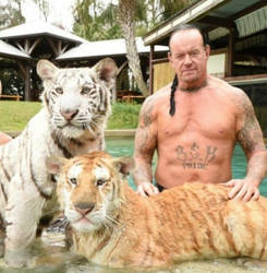Taker and Tigers by hopeless-romance45